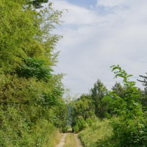 터널가는길(2)