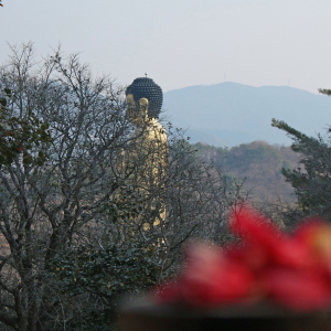 몽환의 숲, 옥룡사지