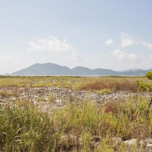 순천 와온 남도삼백리 칠면초밭