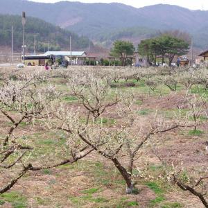 백계산 자락의 옥룡사지 동백숲과 운암사