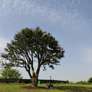 나무그늘에서..